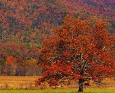 미국 최고의 단풍 여행지-그레이트 스모키 마운틴 국립 공원